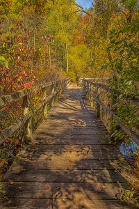 Marsh Bridge in October Light