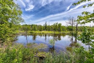 Marsh in June
