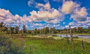Marsh in Mid-August
