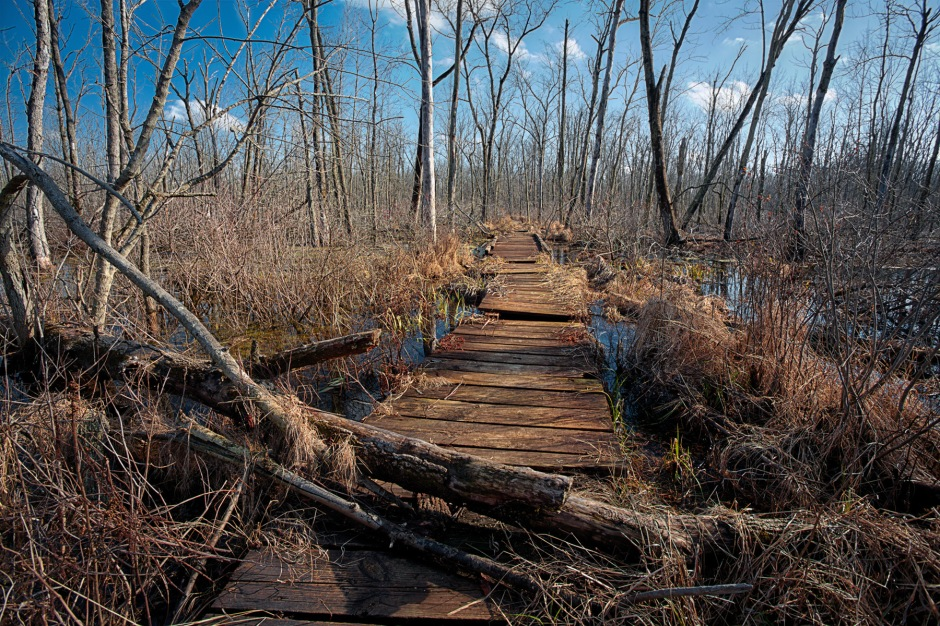 Marsh Trail Bridge in Winter Thaw