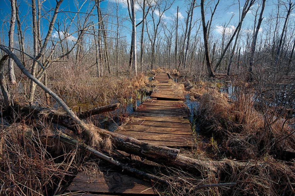 Marsh Trail Bridge in Winter Thaw