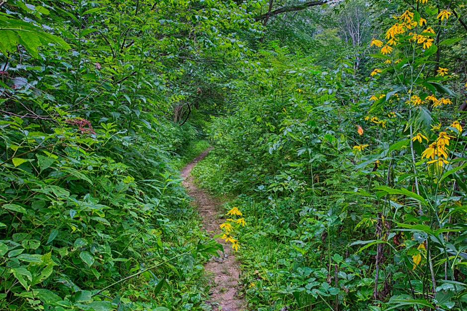 Narrow Trail Through Woods in Late Summer