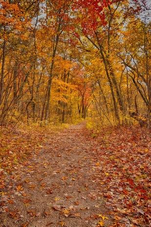 November Woods in Afternoon sm