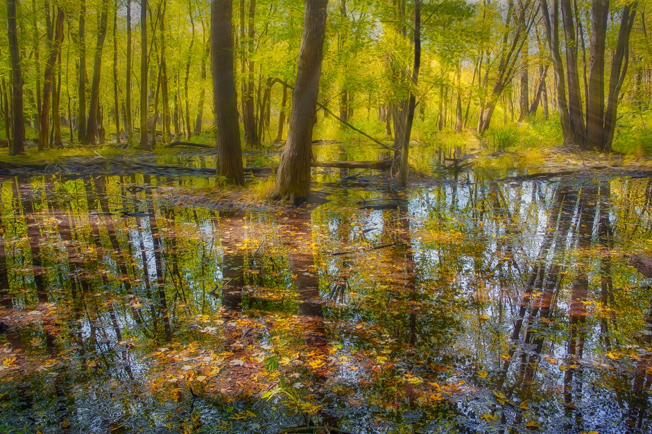 October Sunlight Through Swamp Forest