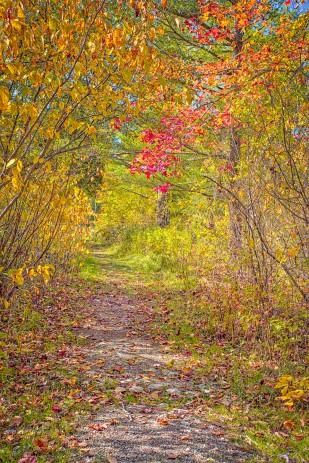 Path Through Dune Woods on Autumn Afternoon sm