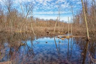 Pond at Start of April