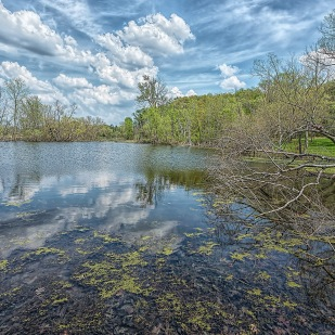 Pond in May