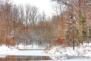 Pond in Late December