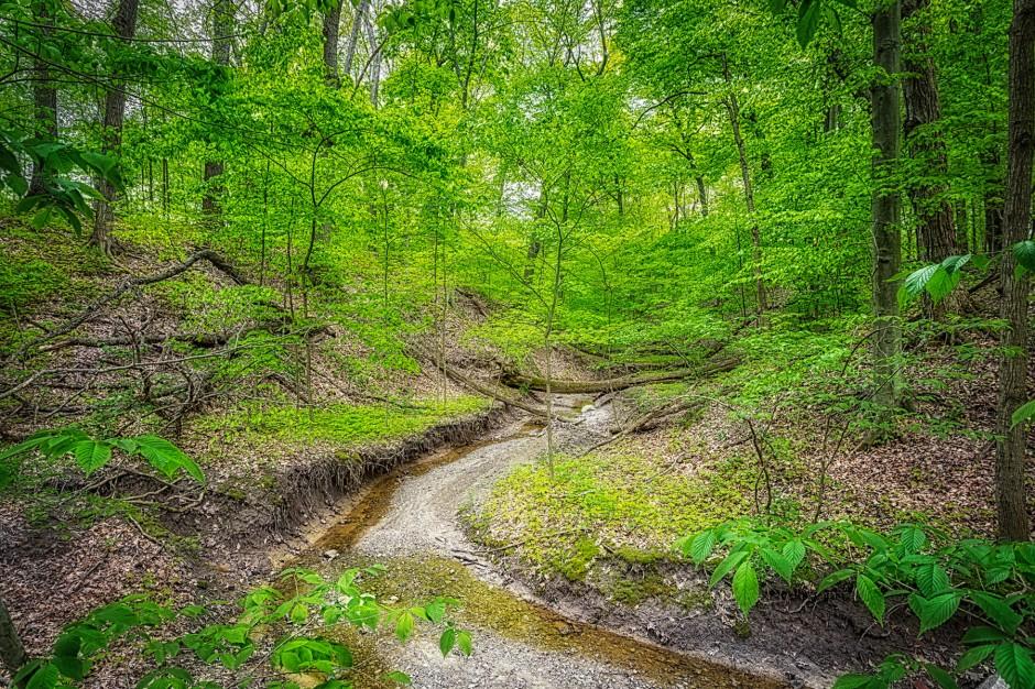 Ravine Creek in May