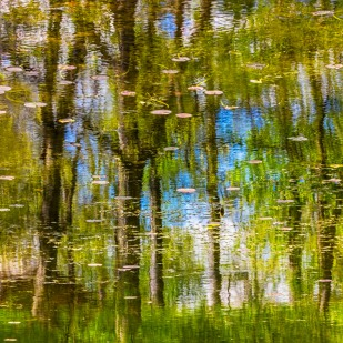 Reflection in May