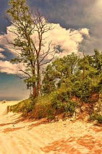 September Sunlight at Dunes