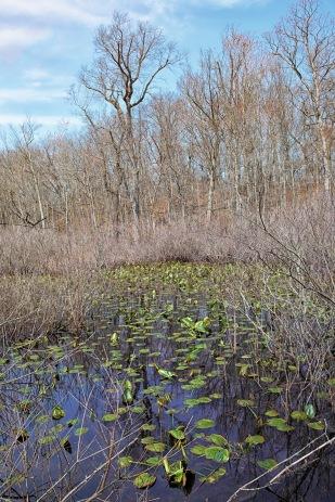 Signs of Spring at Swamp