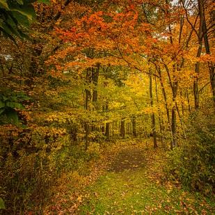 Start of Trail in Autumn