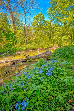 Still River in Early June