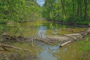 Still River in Spring