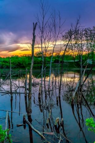 Sundown Beyond Swamp