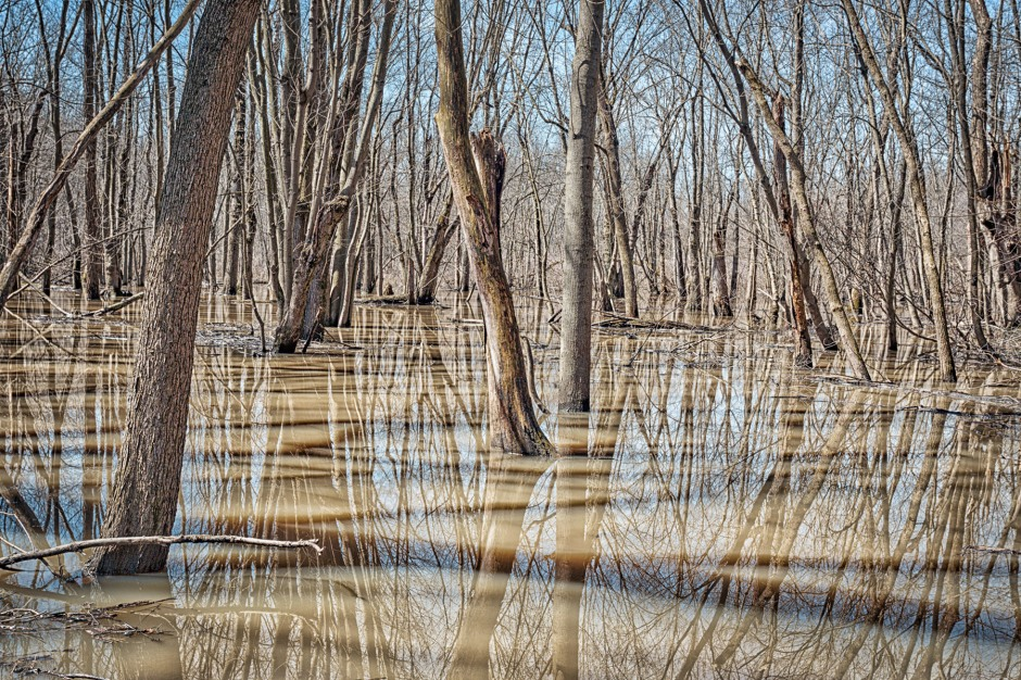 Swamp Forest After April Rainfall