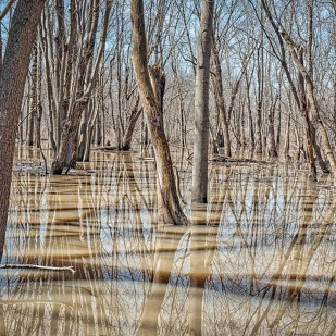 Swamp Forest After Flood