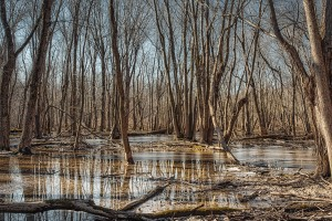 Swamp Forest in Early Spring