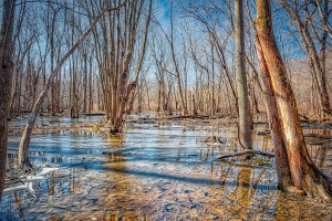 Swamp Forest in February Thaw