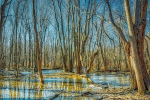 Swamp Forest on Sunny Winter Day