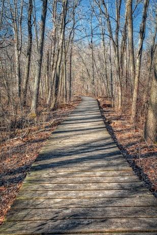 Swamp Walkway at Start of April