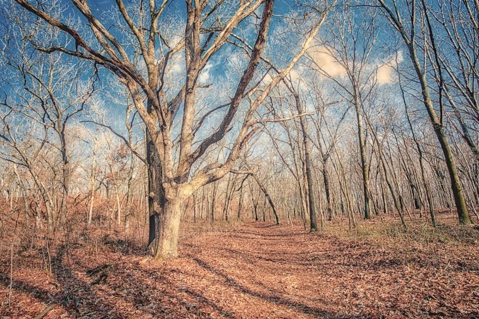 Trail 10 on Warm Winter Day