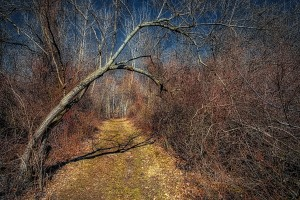 Trail Beneath Bent Tree
