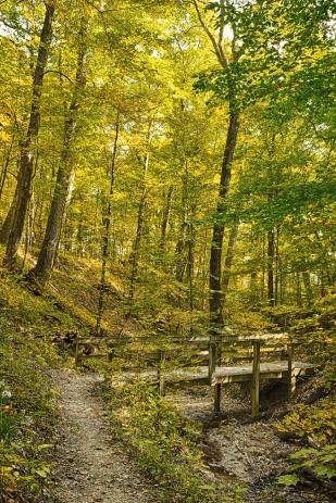 Trail Bridge in Autumn Light 1 sm