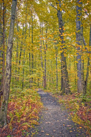 Trail Eight in Late October