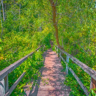 Trail Eight Marsh Bridge in Late Summer