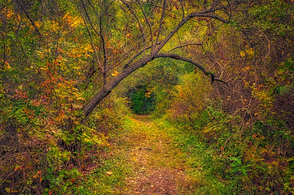 Trail in Early Autumn