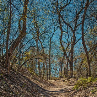 Trail in Early May