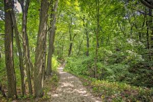 Trail Nine Through Woods