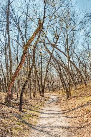 Trail Ten Through Bare Trees