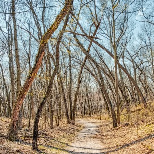 Trail Ten Through Bare Trees