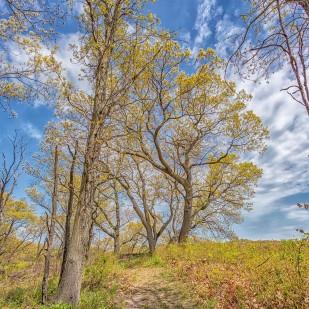 Trail Three Trees
