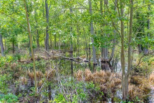Trail Through Marsh