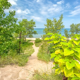 Dune Trail to Lake at End of Summer