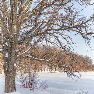 Trailside Tree