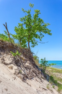 Tree Above Beach