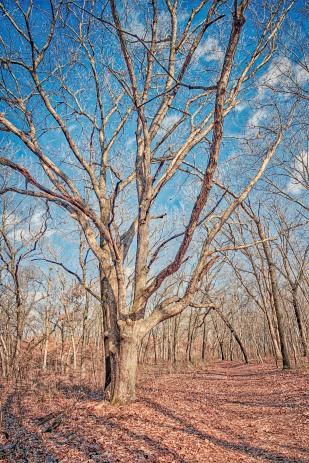 Tree Along Trail Ten