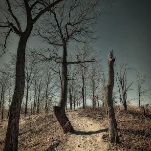 Trees Before Dusk