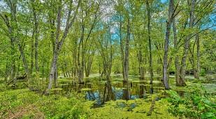 Walking Through Wetlands