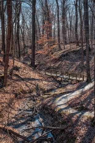 Winding Wooded Trail