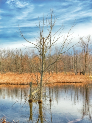 Winter Light at Great Marsh