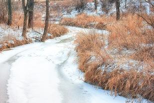 Deer Tracks Across Frozen Creek