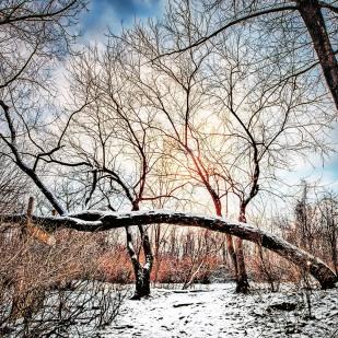 Trail Beneath Leaning Tree