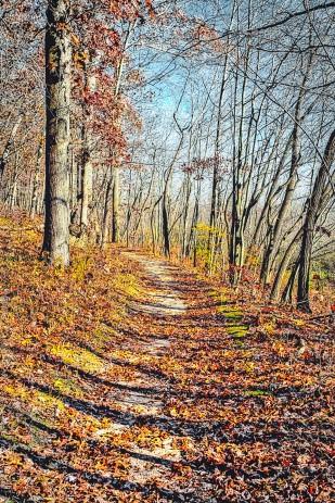 Cowles Bog Trail in Late November