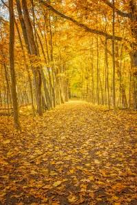 Fall Walk in Woods